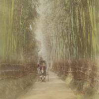 Bamboo Grove at Gogozaka, Kioto